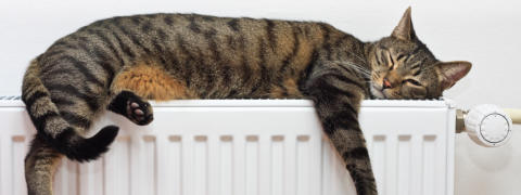 Cat on warm radiator